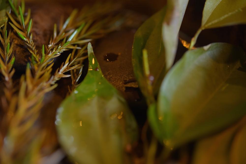 調理の出来を左右する葉っぱたち