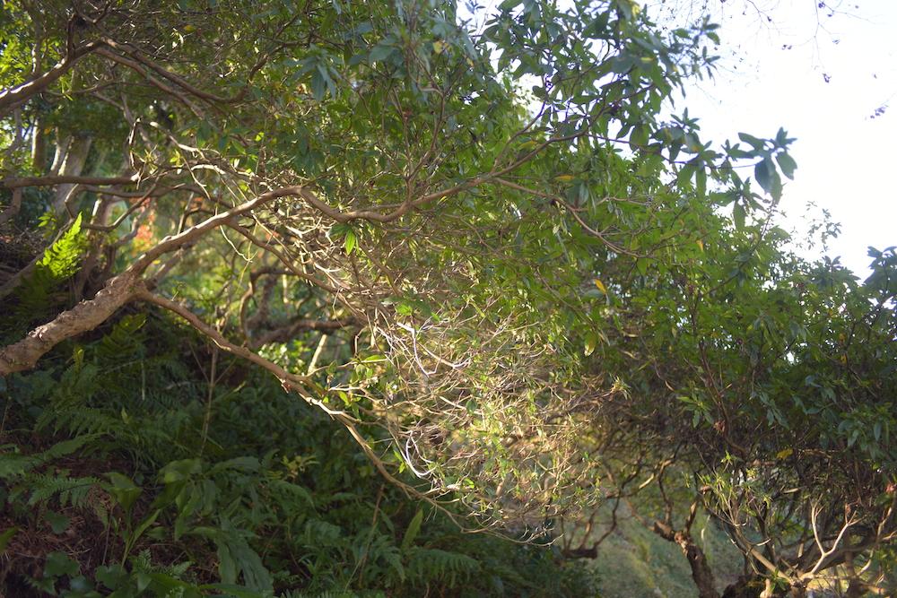 葉っぱシェフの裏山